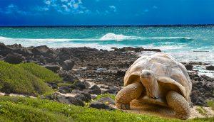 Galápagos Tortuga Gigante