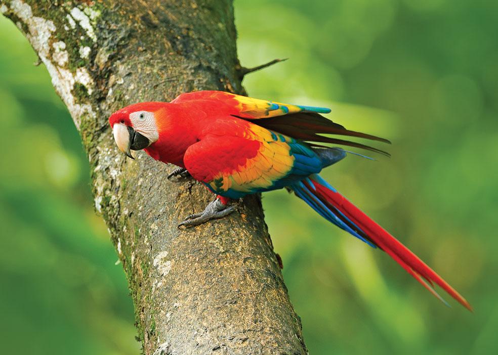 COSTA-RICA4
