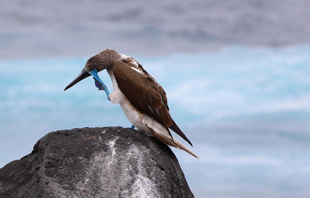 Patrimonio_Galapagos-p