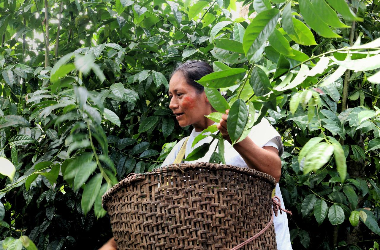 El Reto Amazonía Innova premiará los mejores bioemprendimientos amazónicos 1