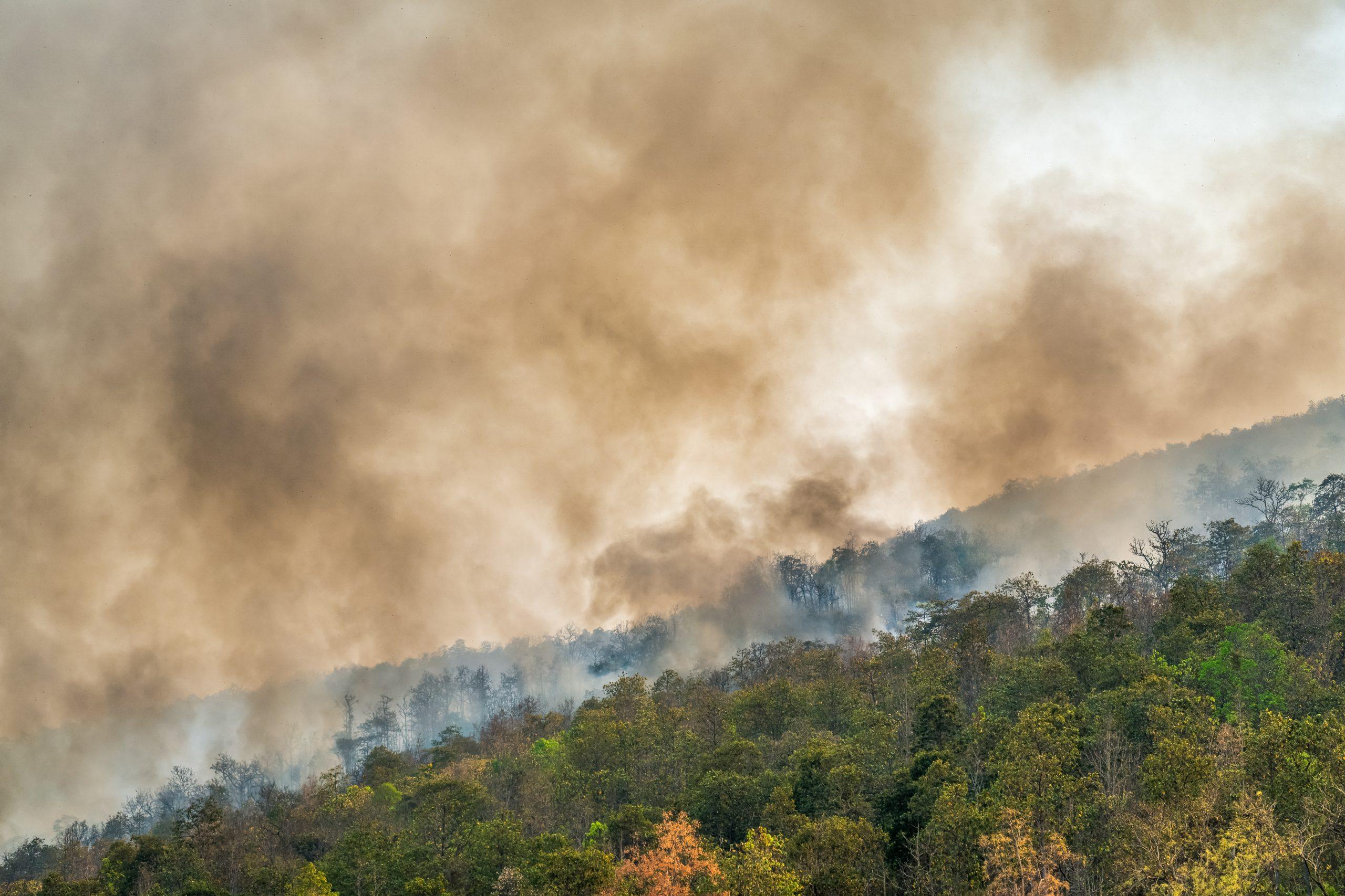 """Ministerio impulsa la campaña """"Ecuador Sin Incendios Forestales"""""""